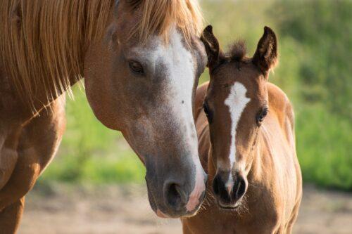 foal-3467629_1920